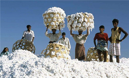 棉花传入中国
